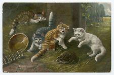 CHATS. HéRISSON.  CATS.  HEDGEHOG. KATZE