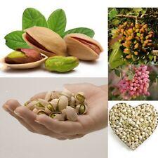 5pcs Pistachio Nut Seeds Bonsai Rare Nut Tree Seeds Home Garden Planting