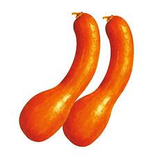 Pumpkin Seed 8 Seeds Golden Hook Pumpkin Cucurbita Moschata Vegetable Seeds B055