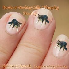 Border Collie, Working Sheepdog, standing, Dog Nail Art Stickers Decals