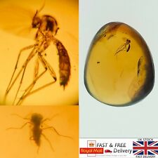 More details for large mosquito and fly in cretaceous burmese amber fossil with 3d frame case*578