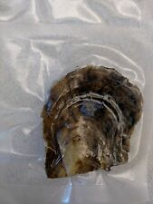 Five Individually Wrapped Akoya Oysters w Small  ~6-7mm Pearl's