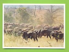 SOUTH AFRICA : KRUGER NATIONAL PARK HERD OF BUFFALO : NEW : NKW N° 36 +/ - 1975