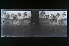 Forêt de Fontainebleau Plaque stéréo Negatif Vintage Amateur moderne