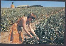 RETRO 1978 THE BIG PINAPPLE QLD,  20c POSTCARD,  NEW