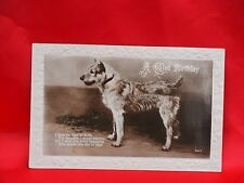 1935 photo postcard  Schnuazer wire coated terrier rascal dog Birthday card
