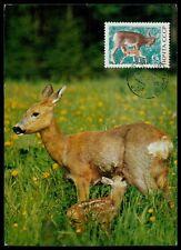 RUSSIA MK 1969 FAUNA WILD REH REHKITZ MAXIMUMKARTE CARTE MAXIMUM CARD MC h0633