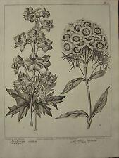 1805 fecha Estampado de Flores ~ ~ Larkspur Sweet William