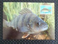 SCHWEIZ MK FISCH BARSCH FISH PERCH MAXIMUMKARTE CARTE MAXIMUM CARD MC CM c5268