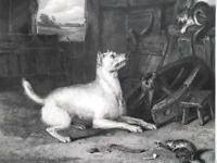 DOG Pestered by Cat & Mouse by Landseer - 1875 Antique Print