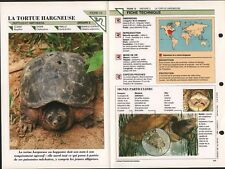 Tortue serpentine Chelydra serpentina snapping Turtle Animals FICHE FRANCE