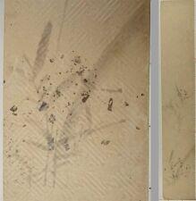 YL45 TANZAKU Plant Japanese Art painting Nihonga Picture