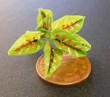 1:12 Maßstab Einzel Mehrfarbig Pflanze Tumdee Puppenhaus Blumengarten P39s