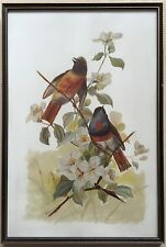 "L Rarford~original painting~""Birds""~1906"