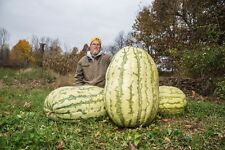5 GIANT WATERMELON SEEDS 2018 200+ LBS POSSIBLE!
