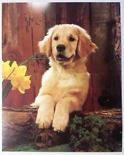 Golden Retriever Puppy Lithograph Poster Print Vintage Wall Art PH498 Pup New