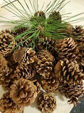 "Lot of 45 fresh Medium Montana  Ponderosa Pine Cones decor 3-4 "" FREE SHIP"