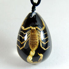 NEW REAL BLACK GOLDEN SCORPION LUCITE NECKLACE PENDANT INSECT JEWELRY TAXIDERMY