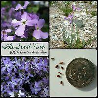 50+ NIGHT-SCENTED STOCK SEEDS (Matthiola bicornis) Purple Evening Fragrant