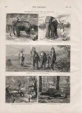 OLD ANTIQUE 1874 PRINT ELEPHANT HUNTING IN CYLON b140