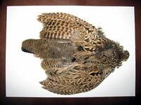 Fly Tying Veniard UV Resin Moulds Streamer Fish Skulls Sculpin heads