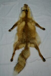 "Tanned Red Fox taxidermy Winter ""Heavy Fur"" Western XL Pelt, Hide"