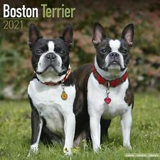 Boston Terrier Calendar 2021 Premium Dog Breed Calendars