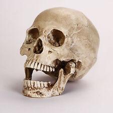 So real! résine replica 1:1 life anatomie humaine crâne squelette medical parti modèle