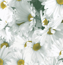 """Field of Daisies Gift Wrap Tissue Paper-10 Sheets 20"""" x 30"""" Brand New-Free Ship"""