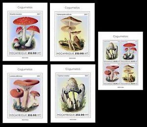 Mozambique 2021 Mushrooms. (102)