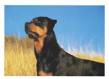 ROTTWEILER Postcard - photo by Sharon Eide saying by Alexander Pope!