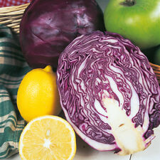 (233) 'KINGS' QUALITY (pickling) cabbage red drumhead   - seeds- Vegetable