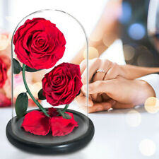 2 Heads Red Eternal Rose Preserved Flower In Glass Dome For Wedding Birthday