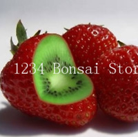 200 PCS Seeds Giant Japan Strawberry Bonsai Plants Rare Fragaria Fruit Garden N