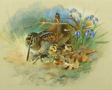 Archibald Thorburn  Woodcock And Young 1934    Wall Art  Canvas