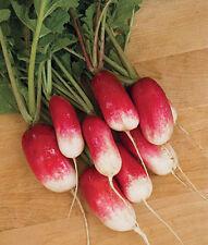 "French Breakfast Radish *Heirloom* (300 Seed's) ""FREE SHIPPING"" <NON GMO>"