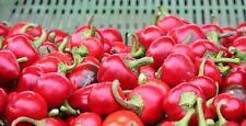 Ungarische Kirschpaprika, schön scharf zum Einlegen, 100% natürlich, 10 Samen
