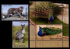 Neve Leopard, canguro, Blue pavone. Zoo di kischinau. 2 W + BLOCCO. Moldavia 2013