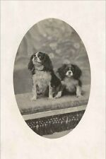 Cavalier King Charles Spaniel Dog Antique Photo Large New Blank Note Cards