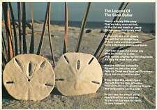 Postcard USA Carolina Sand Dollars