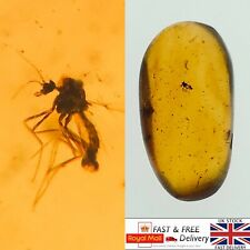 More details for mosquito in dinosaur age cretaceous burmese amber fossil with 3d frame0.71g *529