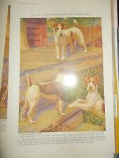 E Miner Smooth & Wire Haired Fox Terrier book plate 1936 National Geographic Mag