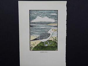 BIRDS, ERIC FITCH DAGLISH, Engraving, c. 1948 Herring Gull #17