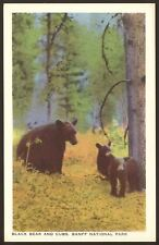 Canada. Banff National Park. Black Bear & Cubs - Vintage Printed Postcard