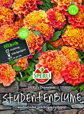 Studentenblume 'Chameleon' - Tagetes patula, prächtiges Farbspiel, Samen, 87245