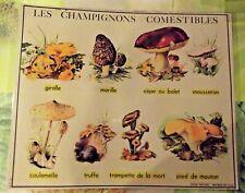 Affiche Set de table poster print Champignons Girolle Morille Truffe Cèpe Bolet