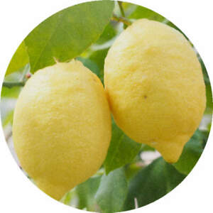 24 x 40mm Round 'Lemons' Stickers (SK00005416)