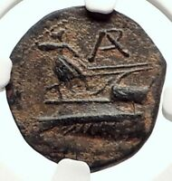 ARADOS Phoenicia Authentic Ancient 242BC Greek Coin TYCHE ATHENA SHIP NGC i68953