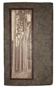 c.1920, OREGON'S LUMBER INDUSTRY, PENINSULA COMPANY, PORTLAND, ILLUSTRATED