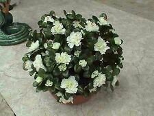 künstliche Blumen  pflanzen  blumen dekoartik Grabgesteck Azalee Weis